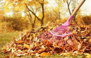 Fall Lawn Care Myrtle Beach