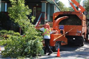 Tree Removal Myrtle Beach
